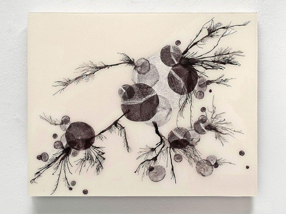 Spores (II)