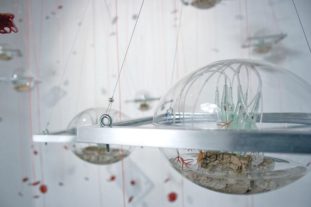 biomes2_2022.jpg