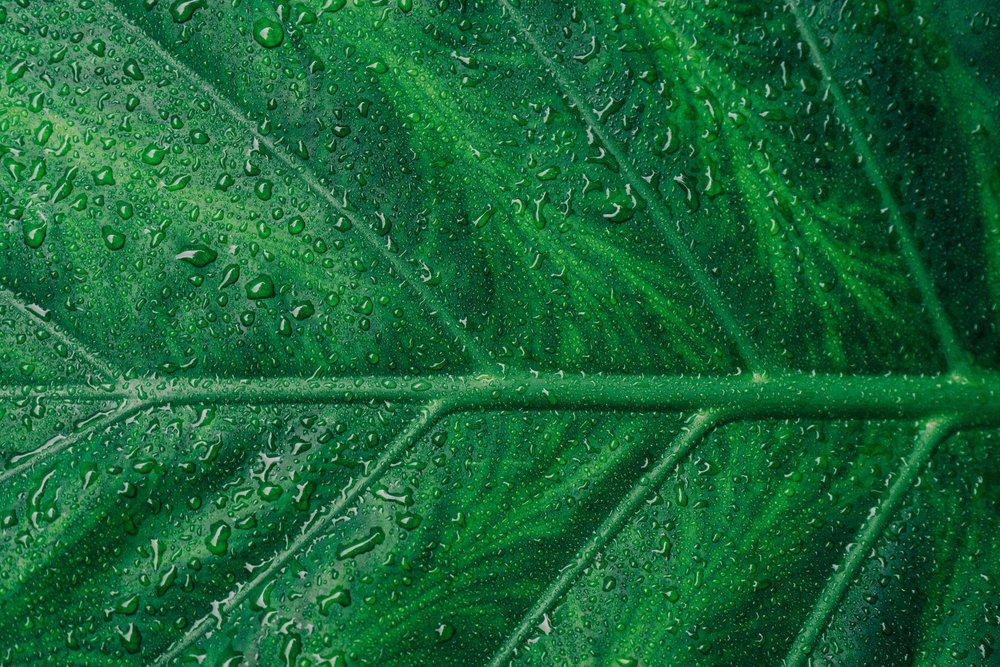 abstract-asymmetry-botanical-1048033.jpg