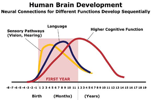 Human Brain Development in children.