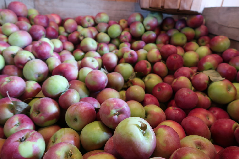 Central New York is full of apple orchards