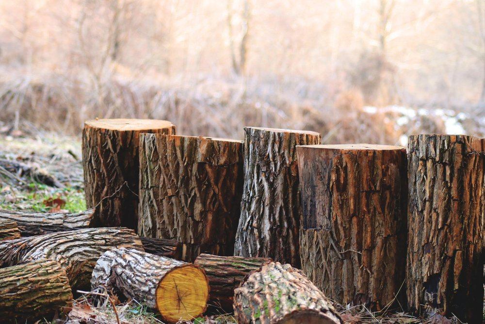 Damaged trees end up as firewood - photo from Pexel