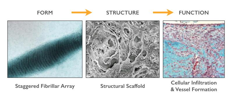 Excellagen is a pharmaceutically formulated, bovine dermal atelo-collagen homogenate in a 3-D staggered array (fibrillar collagen) dermal matrix.