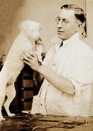 "Figure 2.   Dr. Frederick Banting  in his laboratory with one of his ""subjects"""