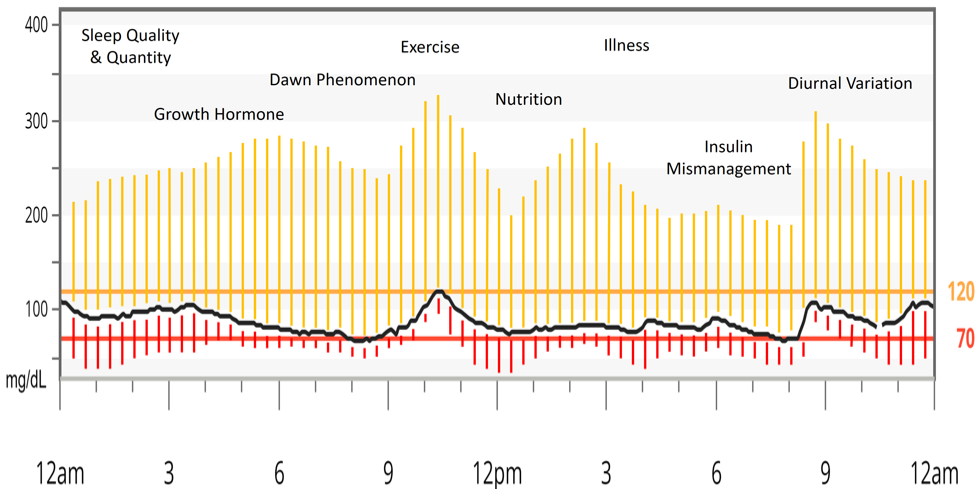 Figure 11   Factors influencing Type-1 Diabetic blood glucose standard deviation.  Representative image of the standard deviation a Type-1 Diabetic may experience from the healthy individual's normal blood glucose curve. Yellow lines represent deviation above normal blood glucose. Red lines represent deviation below normal blood glucose.