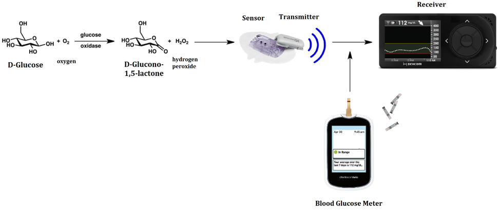 Figure 16 Continuous Blood Glucose Schematic