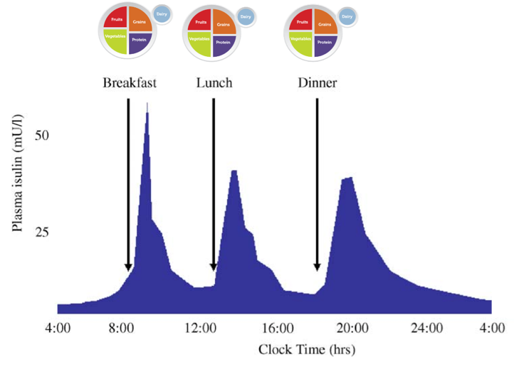 Figure 4   Predicted Endogenous Insulin Response to Mixed Meals Over a 24-hours Period.  Figure 1 from (Thompson R, 2006).