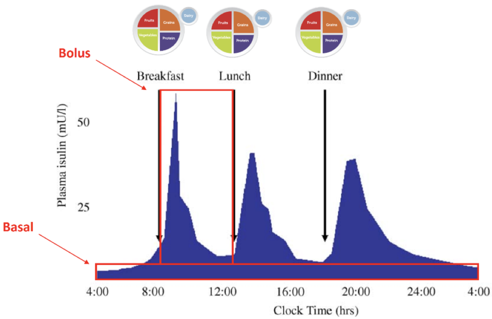 Figure 6   Predicted Endogenous Insulin Response to Mixed Meals Over a 24-hour Period with Basal and Bolus Insulin Requirements Indicated.  Figure 1 from (Thompson R, 2006).