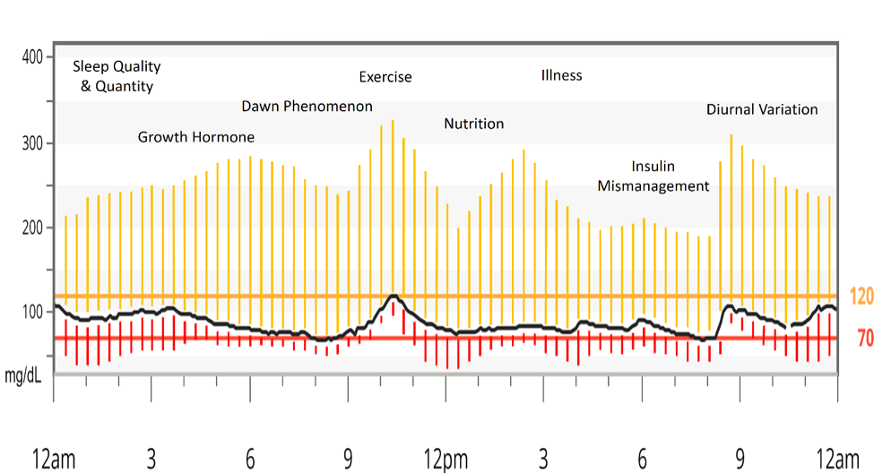 Section 1 - Figure 11 Factors Contributing to Standard Deviation in Type-1 Diabetic Glycemic Control.  Yellow lines represent deviation above normal blood glucose. Red lines represent deviation below normal blood glucose.