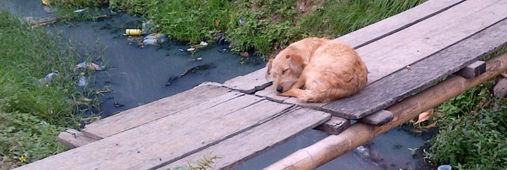dog+bridge.jpg