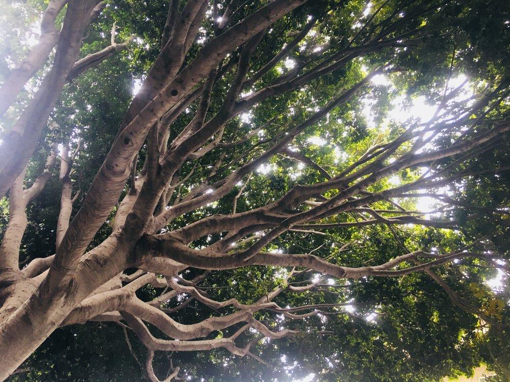 Tree reaching.jpg