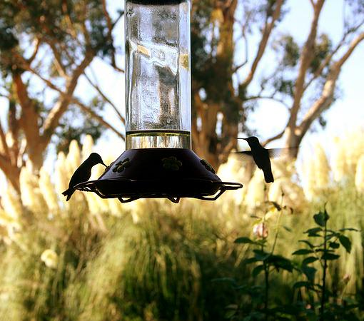 Lazy H - Hummingbirds 01.jpg