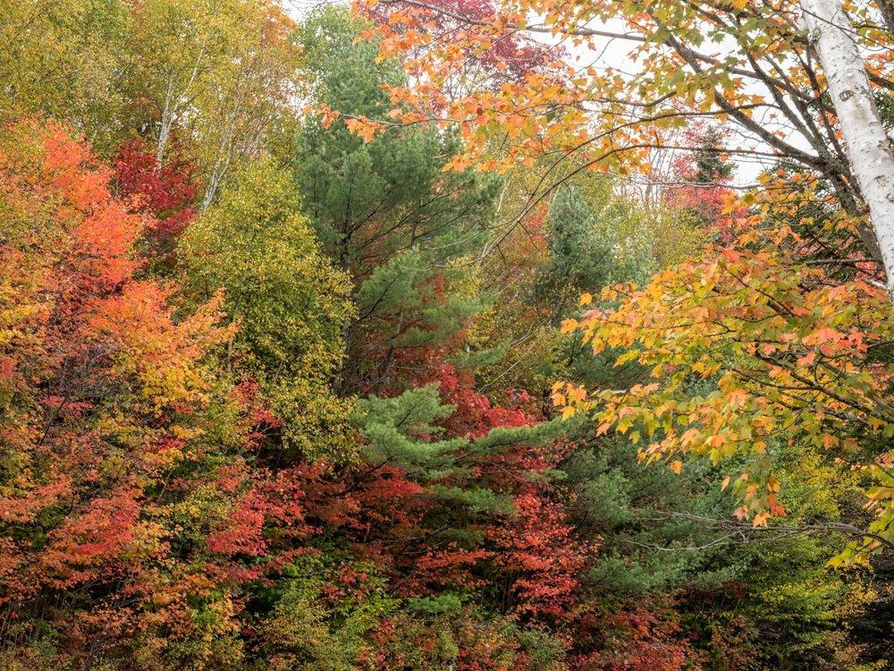 Kankamangus Highway, New Hampshire. Fall, 2017