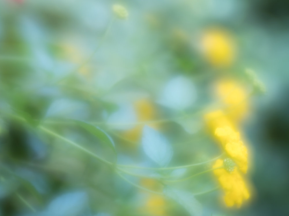 Flowing Flowers with Lensbaby lens