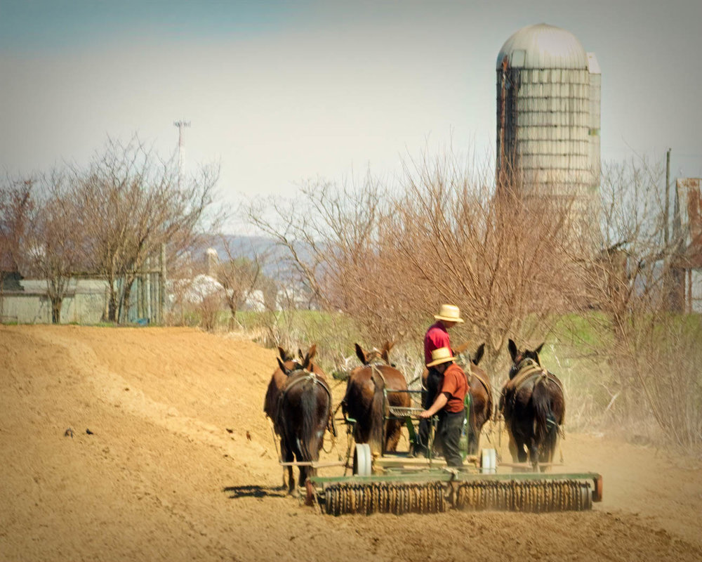 The Amish have chosen to live more simple lives. Does this really bring them peace?