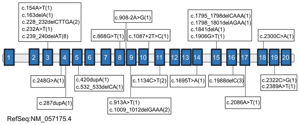 Figure 1: Mutations identified in NAA15, a risk gene for autism spectrum disorders.    Schematic representation of the genomic structure of human NAA15. Exons are shown as blue boxes and introns by connecting lines. The position of the genetic variants of NAA15 are shown and the number of affected individuals is indicated in parentheses. Photo: Cheng et al. Copyright: Cell Press