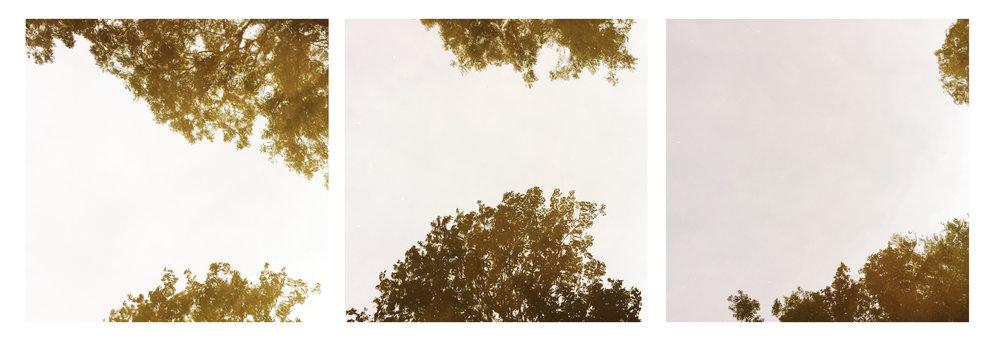 trees water bridge trio.jpg
