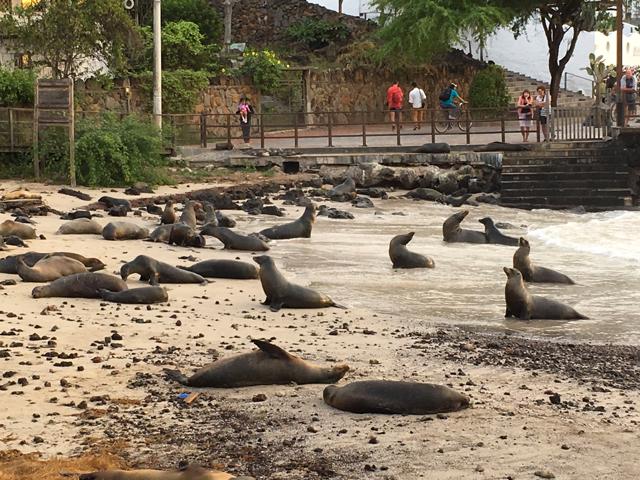 Sea lions, Puerto Baquerizo Moreno waterfront