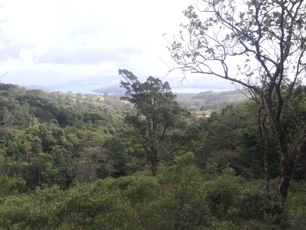Kind of a washed out picture, but I wanted to include this as it is the view from  our favorite piece of land for the whole trip.  It's 7 acres backing up to the Tenorio national Park, with the Aguacate River on one side, and a rough road on the other. Lots of wildlife, birds, protected from the prevailing winds, nice views, and private. We'll see if this is our new home!