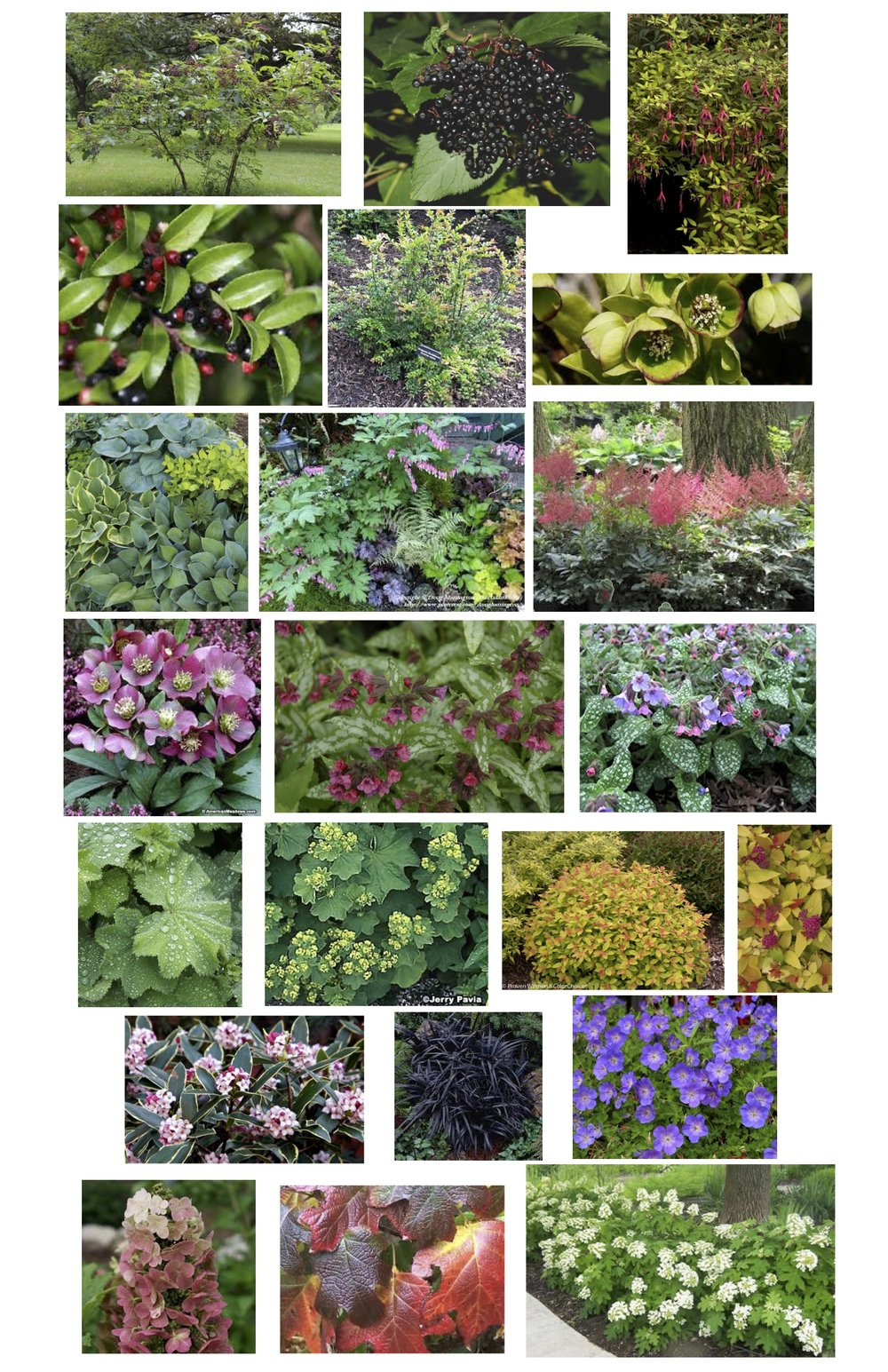 pugs design plant pics.jpg