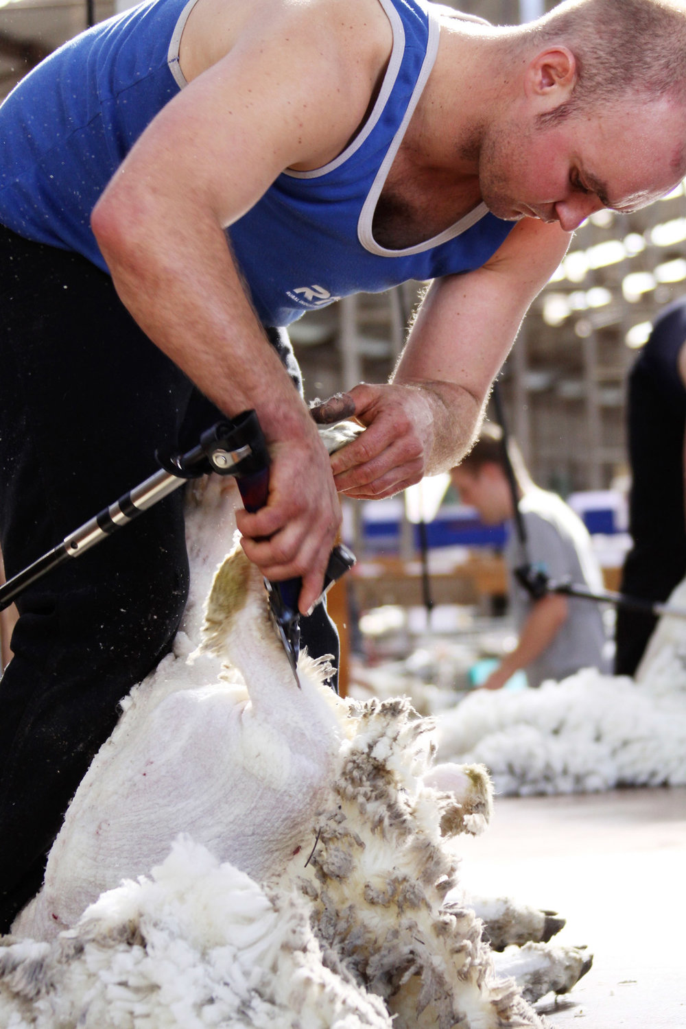 rist-agricultural-collegesheepvention_shearing.jpg