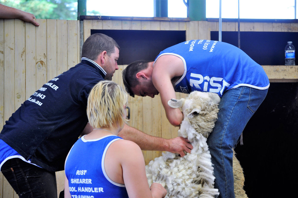 RIST Agricultural College Shearing