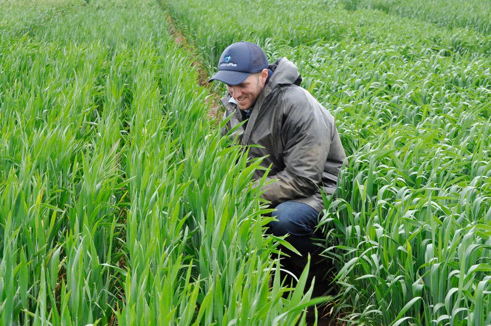 rist-agricultural-collegecrop-trials_oct12-02.jpg