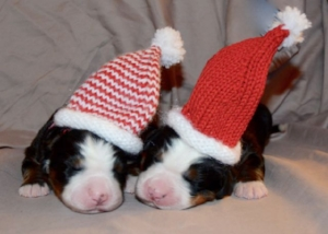 Claire and Kiri as Christmas Elves