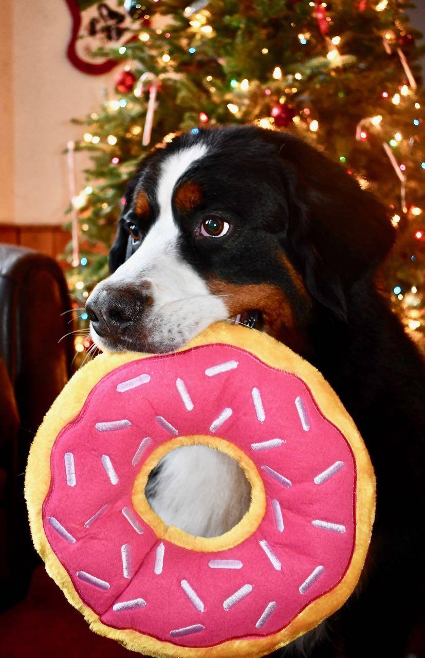 SS Donut (1).jpg