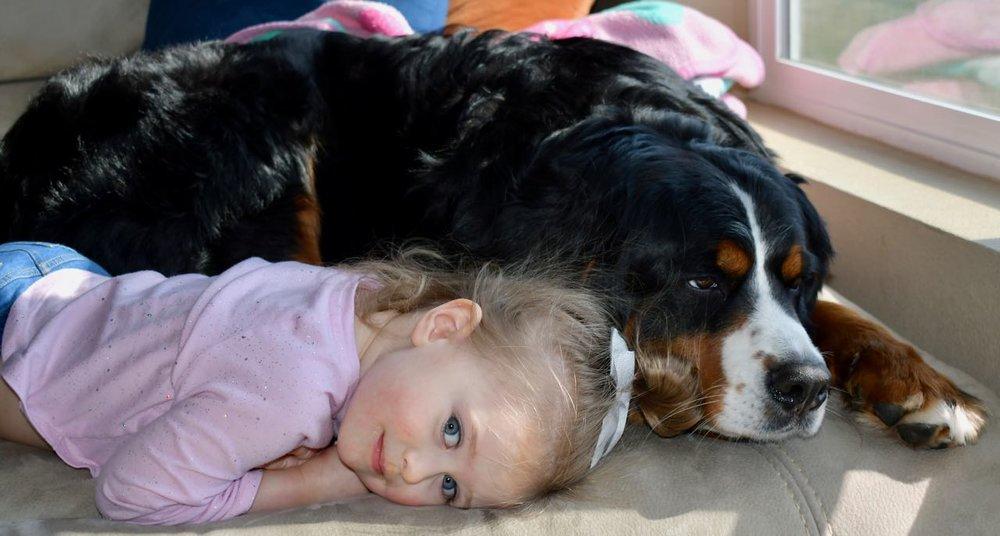 Daisy and Berkeley Resting.jpg
