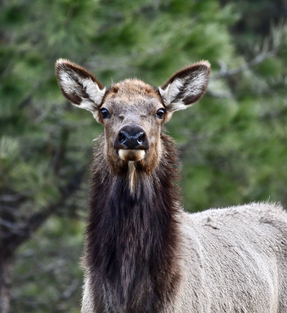 Yes, it is desolate on that drive but should this elk really looked so surprised to see a human?!