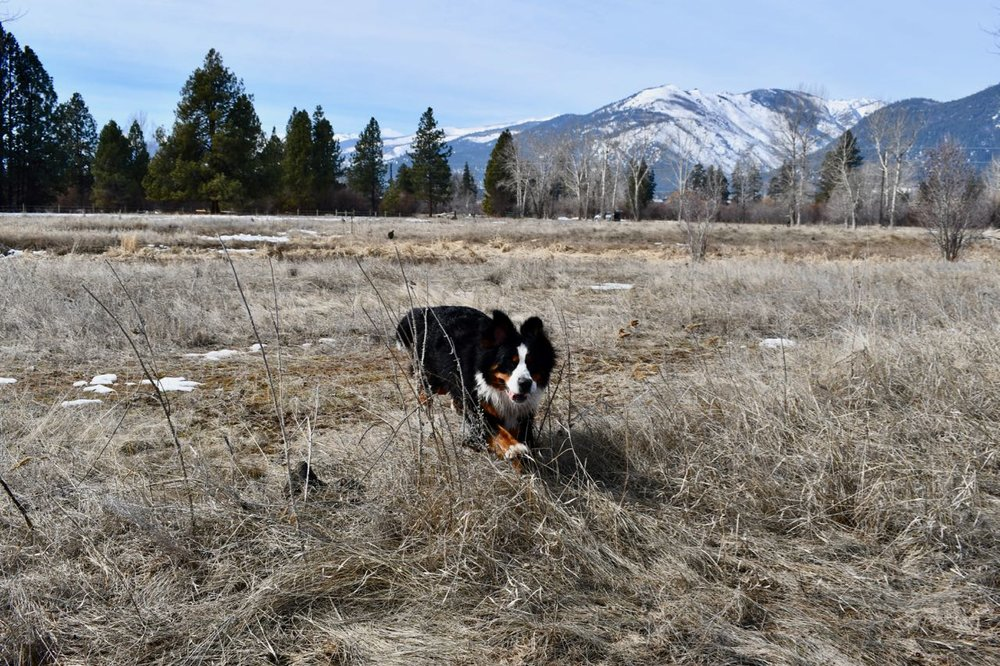 Claire romping March 2019.jpg