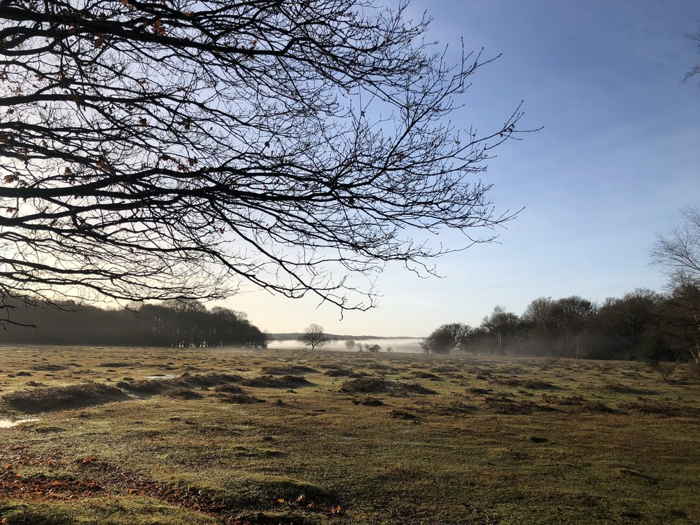 View over the New Forest from DNA offices; 19th December 2018