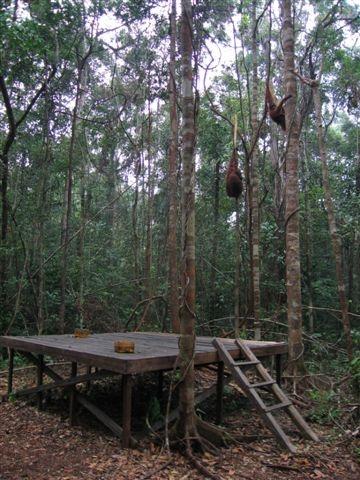 Pondok Tanggui -feeding platfrom