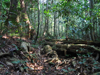 Example of forest