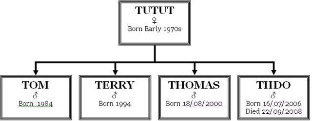 Tut family tree