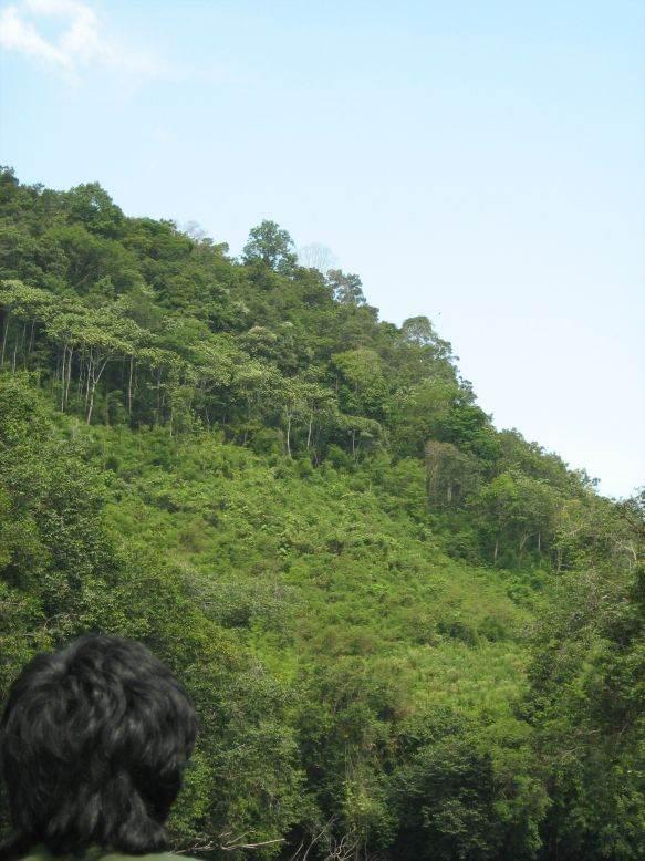 Belantikan Forest
