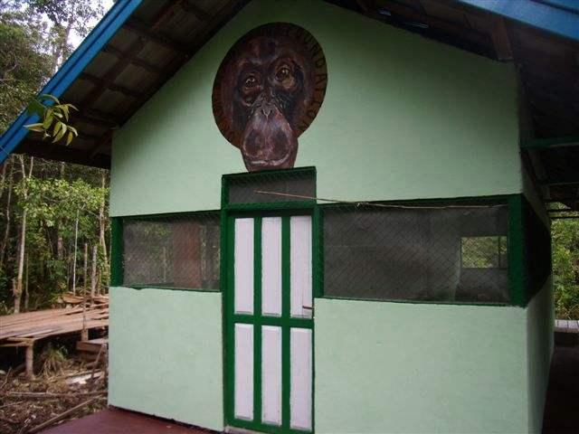 Orangutan Painting Camp Mangkung