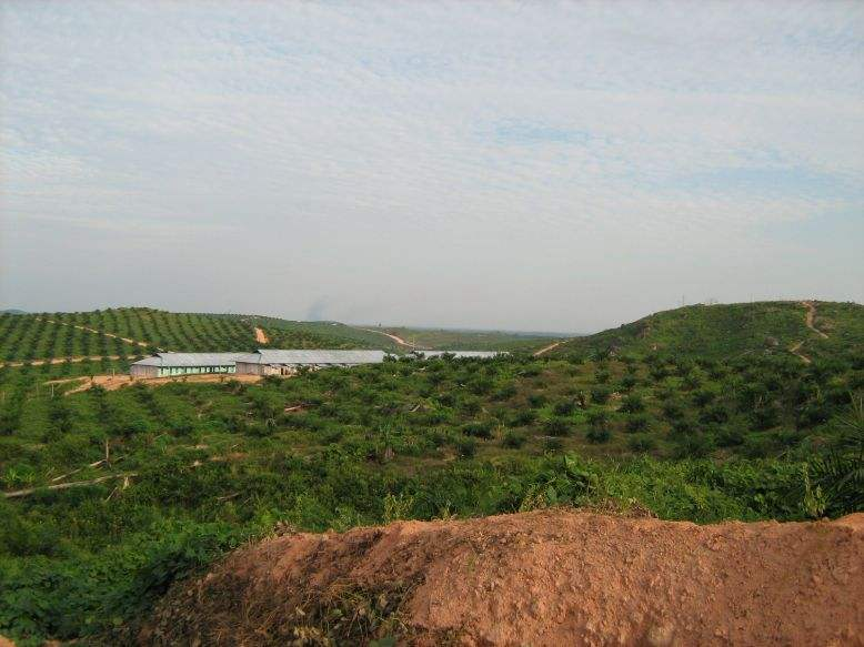 oil palm plantations en route to Belantikan