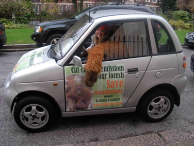 Gwiz orangutans