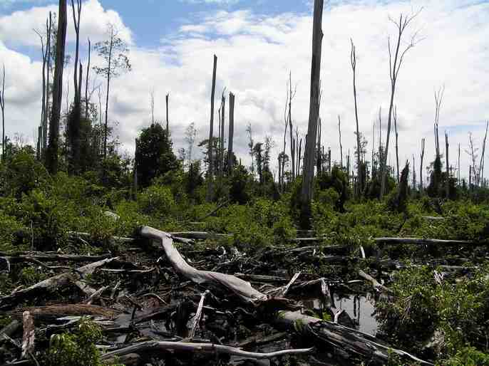 Tripa Swamp - forest clearance (photo from SOCP)