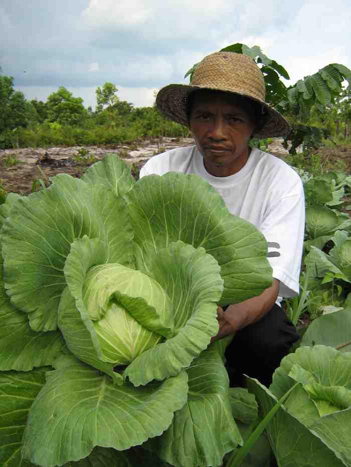 """Pak Wardi """"cabbage man"""""""