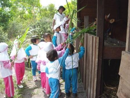 Feeding Kampung Konservasi's cows