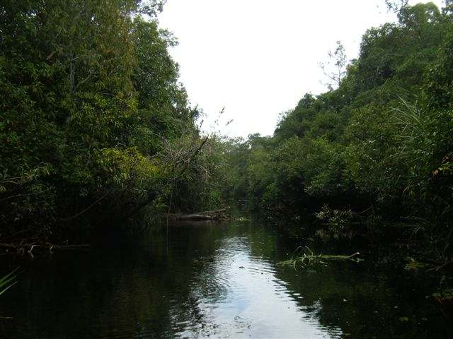 River where the crocodile was found