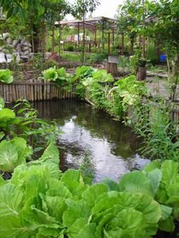 Fishpond 3 - Kampung Konservasi