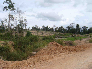 Logging concession - destruction of the forest on the road to Belantikan