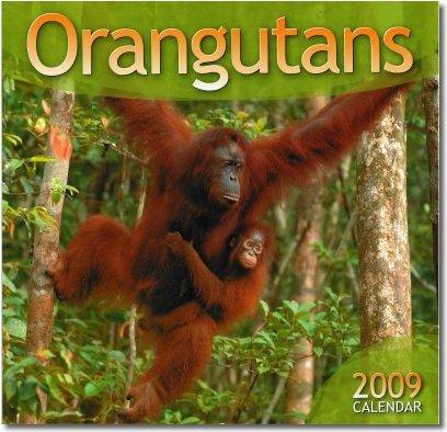 2009 Orangutan Foundation Calendar