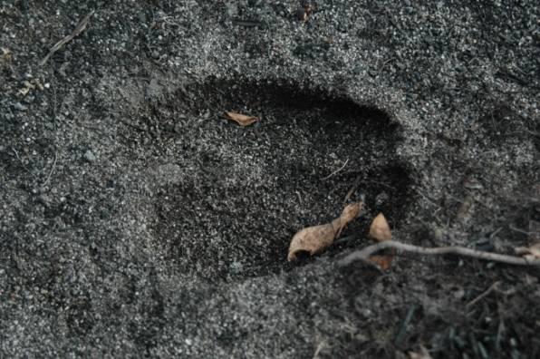 Deer hoof mark