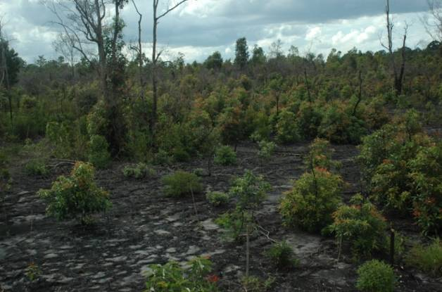 One year later the forest is recovering.