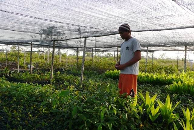Plant Nursery at Lamandau Wildlife Reserve
